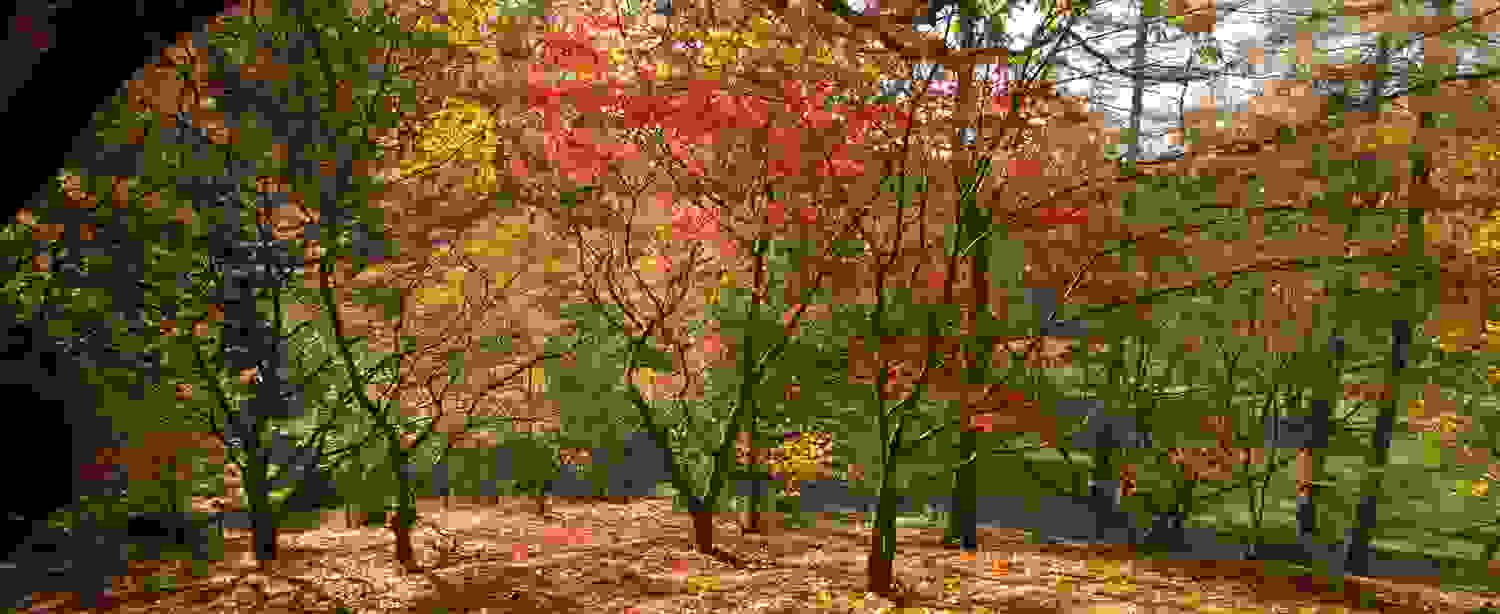 The Valley Gardens